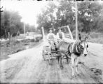 Mule pulling flatbed wagon, two men as passengers