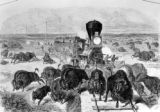 The Far West - shooting buffalo on the line of the Kansas- Pacific Railroad