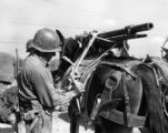 Loading a 37mm pack gun to a pack mule
