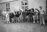 Holstine [i.e. Holstein] prize winners and the boys who take car for them