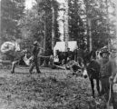 Alder Creek Taylor's or Prospectors Camp