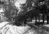Limbs, whole trees and poles falling and the storm still continues