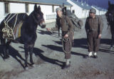 Soldiers with mules in Camp Hale