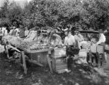 Canon City locals selecting apples for purchase
