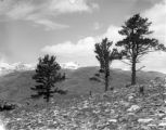 West from Bald Mountain, June 1901