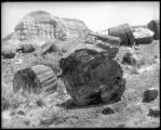 Petrified Stumps, Arizona