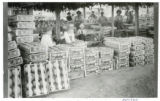 Packing cantaloupes at Rocky Ford for shipment to eastern markets