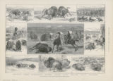 Buffalo Hunting in the Western Territories of North America