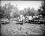 Spraying trees, Morrisaia [sic] Ranch, Grand Valley, Colo. Midland Ry.