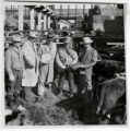 Millionth head of cattle at Denver Stock Yards