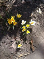 First blooms of spring 2010