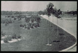 Early Photograph of Parkway Plantings-17th Ave. Parkway