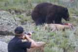 Teller County Sheriff deputy Tim Woodruff, CQ, fires his rifle above the head of a bear to scare...