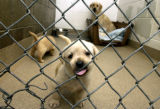 (FT. COLLINS, Colo., July 7, 2004) One of the more brave pups took the gate to task testing her...