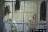 Inmates wait in their cells at the Immigration Detention Center in Bangkok where John Karr, who...