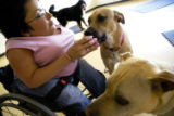 (WESTMINSTER, Colo., June 29, 2004)   Lisa Ferrerio, owner of The Dog and I plays with client's...