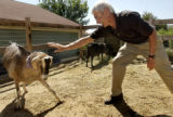 (Lafayette, Colo., July 8,  2004)    Dave Schneider, a resident at Nyland, a cohousing community...
