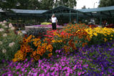 Susan Strating (cq) looks at the flowers in The Annual Flower Trial Garden August 30, 2006 in Fort...