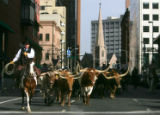 Gary Cole (cq) leads a group of long-horned steers down Tremont Ave. in the National Western Stock...