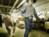 Denver, CO Jan. 18, 2006 Zack Devol, 12, of Elbert, CO, moves a Miniature Hereford for friends...