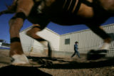 "Bailey Cowen (cq), of Elbert, Colorado, exercises ""Rusty"" on January 6, 2006 before the..."