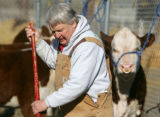 Pinky Morgison (cq) spreads straw for cattle beds at the 100th National Western Stock Show in...