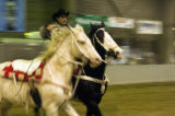 (Thurs. Jan. 12, 2005) Shawn Brackett of Tulsa Okla. practices with a pair of horses during a...