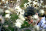 Nancy Hanson (cq) of Denver enjoys the blossoms on a 'Leonard Messel' magnolia at the Denver...