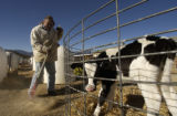 Matt Johnson (CQ), 36, cleans the calf pens at the East Canon City Complex of Colorado state...