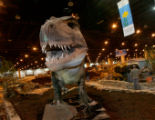 A life size T-Rex gets assembled Tuesday afternoon January 30, 2007 at the Colorado Convention...