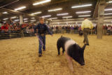 Cory Reid, nine years old from New Mexico, keeps his swine moving around the arena for the...