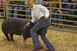 Taylor Kirkpatrick, 10 years old from Bloomingburg Ohio, had alittle trouble with her swine during...
