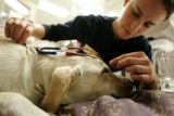 Yvonne Vaicius (cq) a CVT (certified veterinarian technician) at the Wheatridge Animal Hospital in...