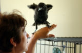 (DENVER, CO., Aug 9, 2004) Laura Mayfield, rehabilitator at Wild B.I.R.D. (acronym for Bird...