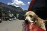 (CRESTED BUTTE, Colorado. July 22, 2004) Crested Butte prides itself for being laid back and...