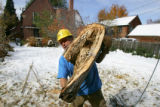 Davey Tree Service employee Camerino Chavez (cq) of Denver works to clear tree limbs from the...