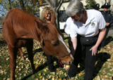 Chester, left, Kathie Ruffatto, behind horse head, Detective Holly Kaye, feeds an apple to the...