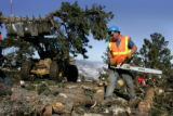 Marc Wood (cq) cuts up trees as he and a crew clear a road on the top of Lookout Mtn in Golden,...