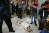 Boone,9, hangs out in the hallway before testimony. He is owned by Connie Fredman, (cq), Ft....