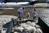 Chris Cory (cq),left, and his son, Sam Cory, 9, load broken-up ice into a pickup truck, Monday...