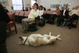 Boone, resting on his back in his favorite belly-scratch pose, attends the hearing as his owner,...