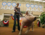 Emma Vickland (13), from Longmont, Colorado, poses with her hog, Cinderella, as the auction...
