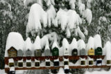 A group of mailboxes are covered with heavy wet snow on  Forest Estates Road Thursday morning...