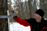 Entomologist with the U.S. Forest Service Jose Negron, cq checks a temperature probes he placed in...