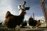 Billy a resident at the Denver Rescue Mission's Harvest Farm in Wellington, CO collects eggs in a...