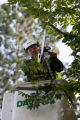 Guillermo Eil, cq, of Davey tree service cuts down damaged limbs and branches, Friday Oct. 27,...