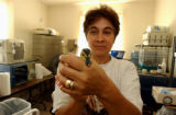 (DENVER, CO., Aug 9, 2004) Laura Mayfield, rehabilitator at the Wild B.I.R.D. (acronym for Bird...
