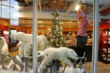 Retail consultant Susan Sisk (cq) sets up a holiday window display of polar bears in the Museum...