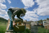 Paul Limbach (cq), owner of Western Colorado Honey, reverses the hives and installs pollen traps...