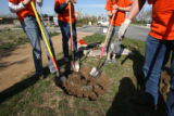 Over 100 trees were planted by school children in City Park in Denver, Colo. adjacent to 23rd...